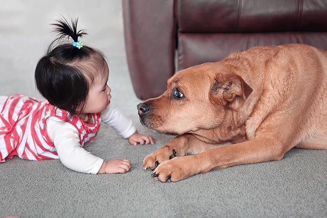 Baby-meet-dog